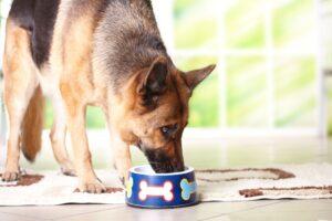 מדוע תזונה בעלת חלבון גבוה כל כך טובה לכלבים?